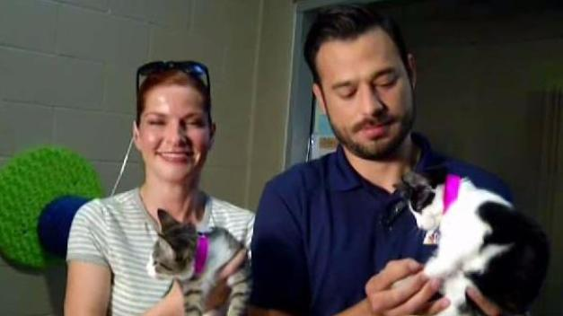 NBC 7 and Telemundo 20 Gear Up to Clear the Shelters