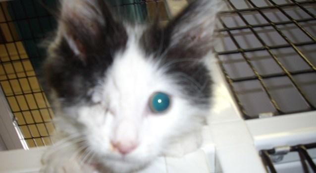 Kitten Still Has 8 Lives