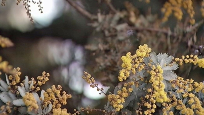 Allergies Beware: Pollen Counts to Worsen in San Diego This Weekend
