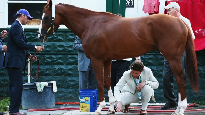 California Chrome to Recover From Injury at Farm