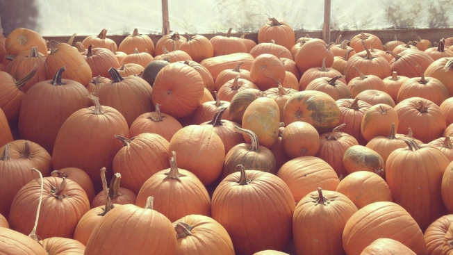 Free Pumpkins Offered at Pop-Up Patch