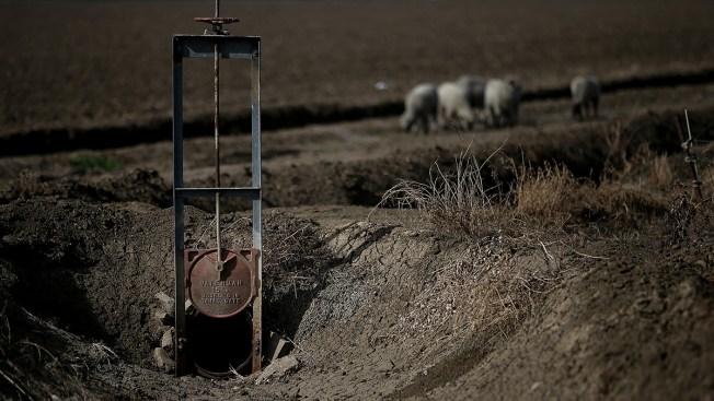 Scientists: California Drought Threatens Animals