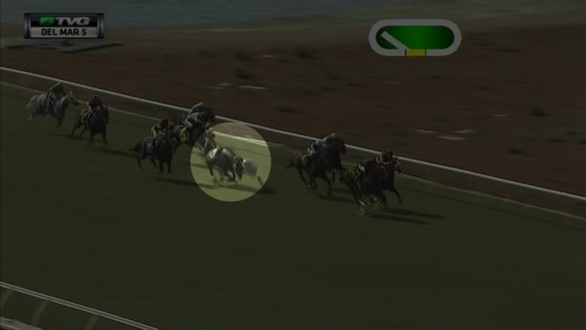 Necropsies Reveal New Info on Del Mar Horse Deaths