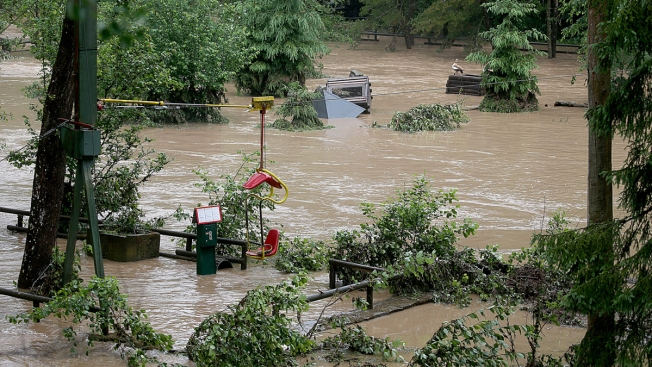 Flood Hits German Zoo, Sparks Fear of Lions, Tigers on Loose