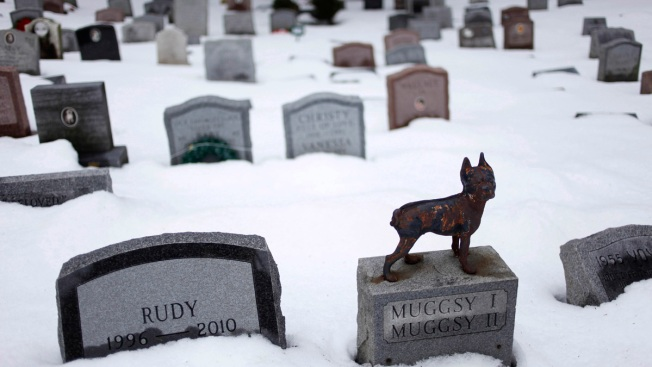 Forever With Fido: NY to Allow People to Be Buried With Pets