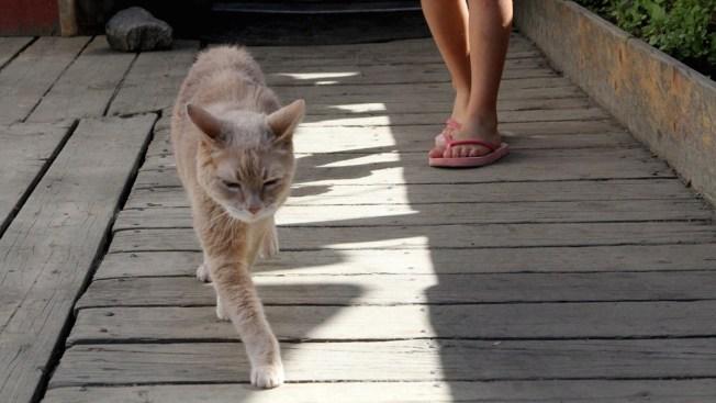 He Was Purrfect: Honorary Cat Mayor in Alaska Town Dies