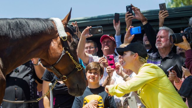 The Pharoah Effect: Triple Crown Win Gives Racing a Boost