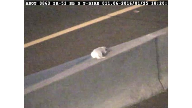 State Worker Rescues Daring Little Puppy From Busy Arizona Highway
