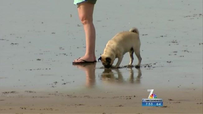 San Diego Police Beach Team Use Body Cameras to Patrol ...