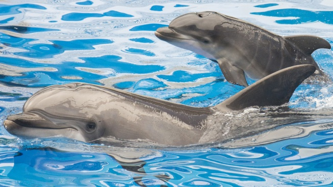 Death of baby dolphin triggers outrage in Spain