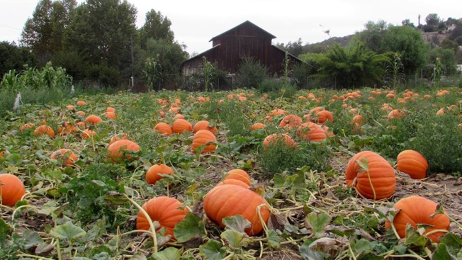 Fall 2017 Pumpkin Patches in San Diego
