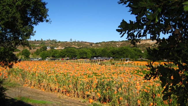 Image result for fall in san diego