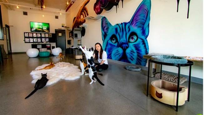 New North County Spot Pounces on Cat Café Trend