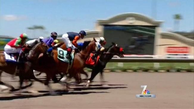 7th Horse Dies at Del Mar This Season