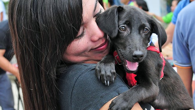 No Question Pets Can Communicate: San Diego Animal Expert