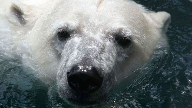 Russian Meteorologists Rescued After Trapped by Polar Bears