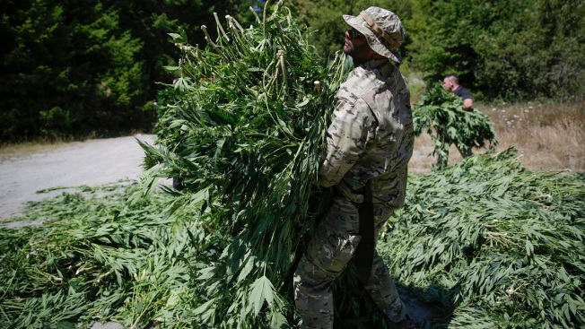 California Announces 148 Arrests in Illegal Marijuana Planting Enforcement Program
