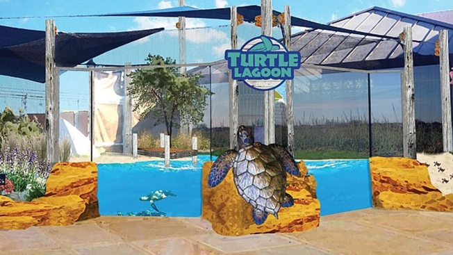 Living Coast Starting $300,000 Turtle Exhibit Renovation