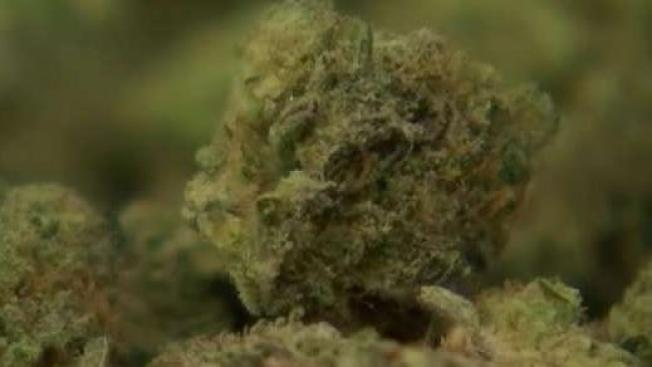 Legal Challenge Highlights Battle Between Vintners and Pot Farmers