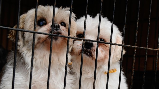 Anti-Puppy Mill Bill Passes CA State Senate