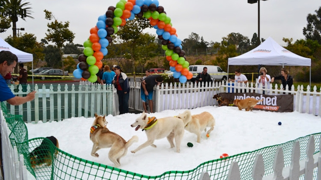 California Drought Cancels Summer Snow Day for Dogs