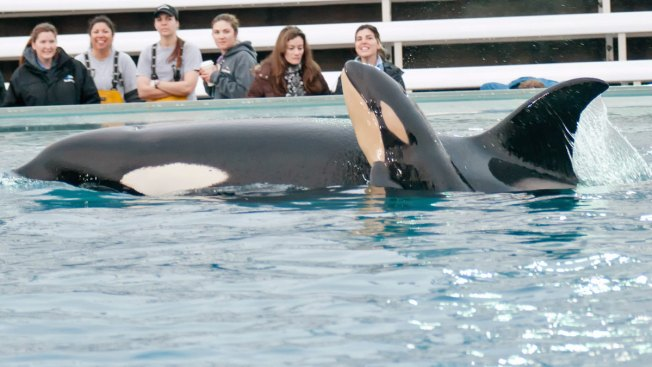 SeaWorld CEO to Step Down as Park Attendance Drops