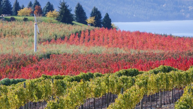 Introducing Your New Favorite Wine Region