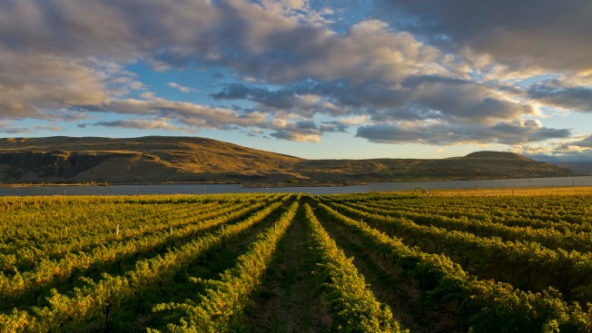 Discover Award-Winning Washington State Wine