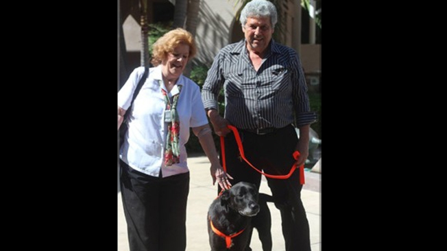 Dog Lost in San Diego's 2007 Wildfires Reunited with Owners