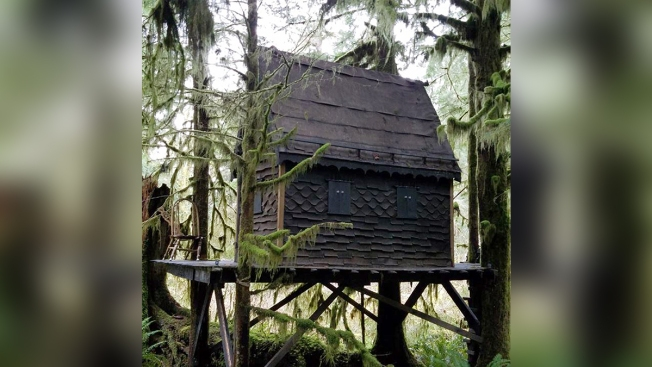 Child Porn Found in Illegal 'Fairytale' Treehouse at Washington Forest