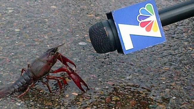 NBC 7's 'Crawfish Interview' Photo Resurfaces as Meme on Social Media