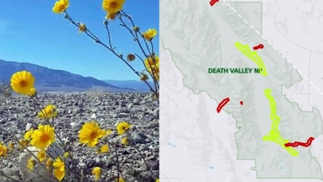 Death Valley Wildflowers: The Map