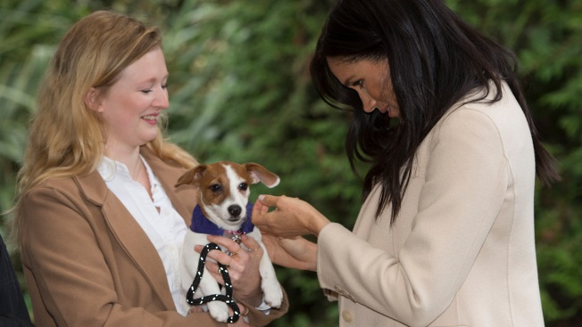 Meghan Markle Shares Heartfelt Message on the Joy of Pet Adoption