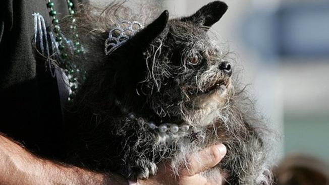 Register Your Lovey for 'Ugliest Dog' Contest