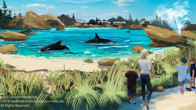 SeaWorld to Expand Killer Whale Environments