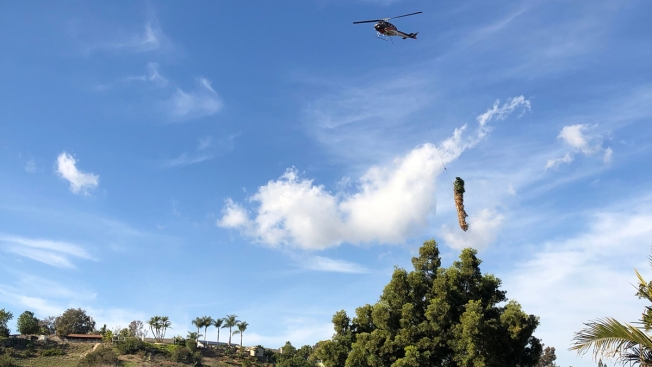 Helicopters Airlift Palm Trees Out of Urban Canyon in Tierrasanta