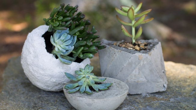 Concrete Planters Are Easy, Cheap to Make