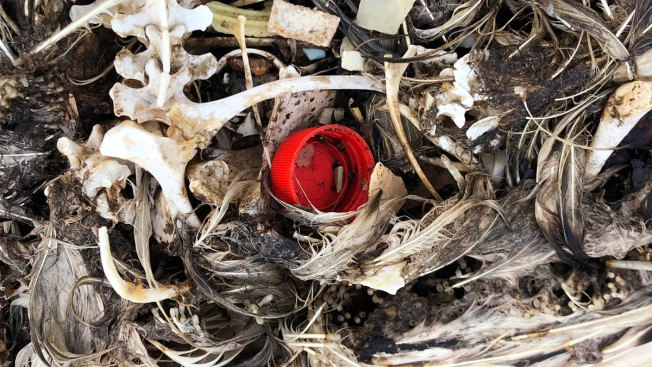 Iconic Pacific Bird Sanctuary Ravaged by Plastic and Death