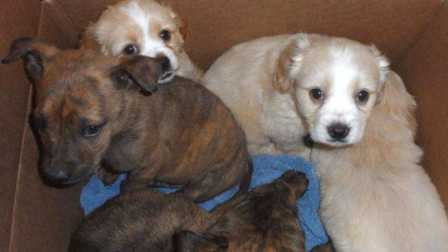 Two Dozen Puppies Rescued From Outdoor Shelter