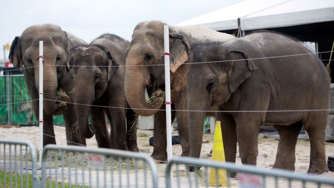 Ringling Bros. To Retire Its Elephants Far Ahead Of Schedule