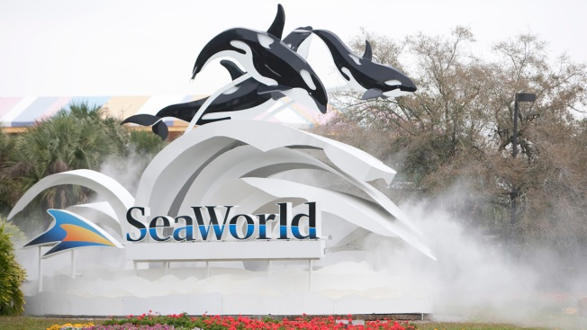 Whale Rescued From Stranding 8 Years Ago Dies at SeaWorld