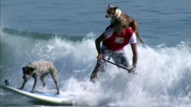 Pooches Ride the Waves at California Dog Surfing Competition