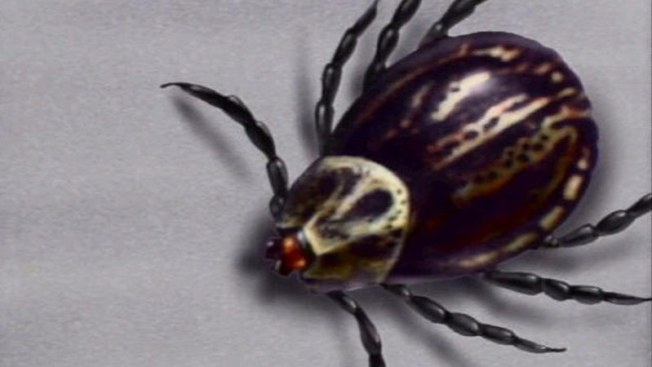 The Tick and Its Mystery Disease