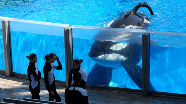 SeaWorld's Tilikum, Orca That Killed Trainer, Dies