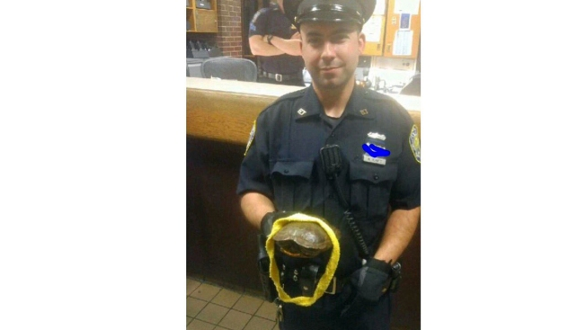 Police Reunite Traveler With Lost Turtle at NYC Bus Station