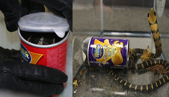 Man Sentenced for Smuggling Cobras in Potato Chip Cans