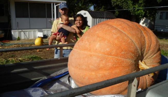 980-Pound Pumpkin Breaks Record