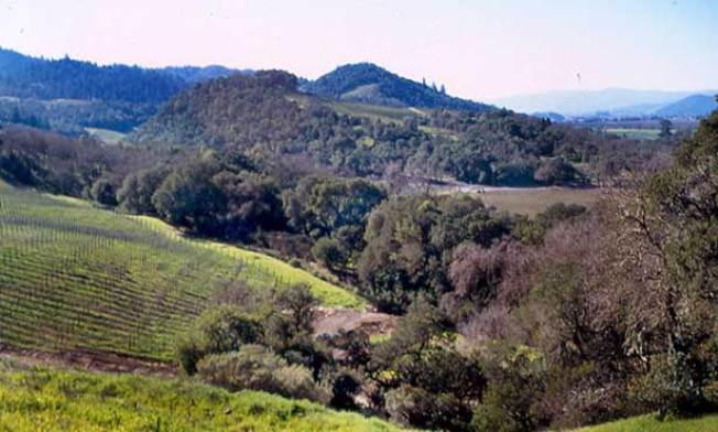 Wine Country Honored for Being Slow