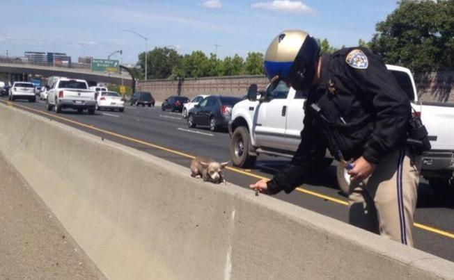 Chihuahua in Freeway Rescue Photo Reunited With Owners