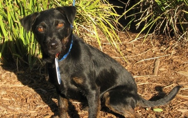 'No Place Like Home' For Wayward Puppy Found in San Diego